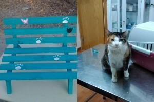 Sorteo de un banco de madera para gatos para pagar los gastos de Libia acogida por ANCAT